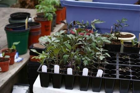 جای نشاء گیاهان